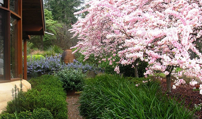 house-side-passage-bushes-cherry-blossoms