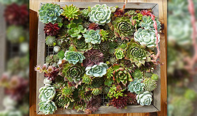 the-succulent-garden-vertical-garden-layout-leaf-flowers