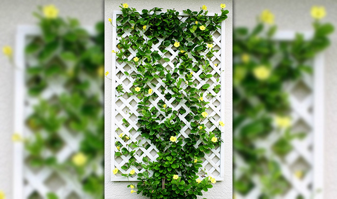 pinterest-crawling-vine-leaves-plant-vertical-garden