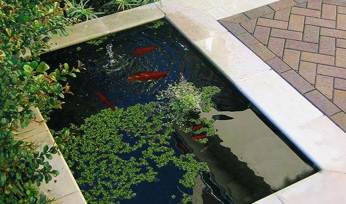 atc-pond-fish-living-water-garden